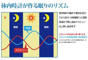 体内時計が作る眠りのメカニズム